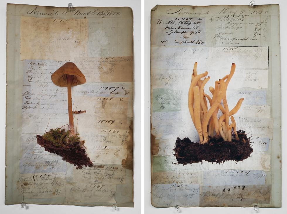 mushroom4