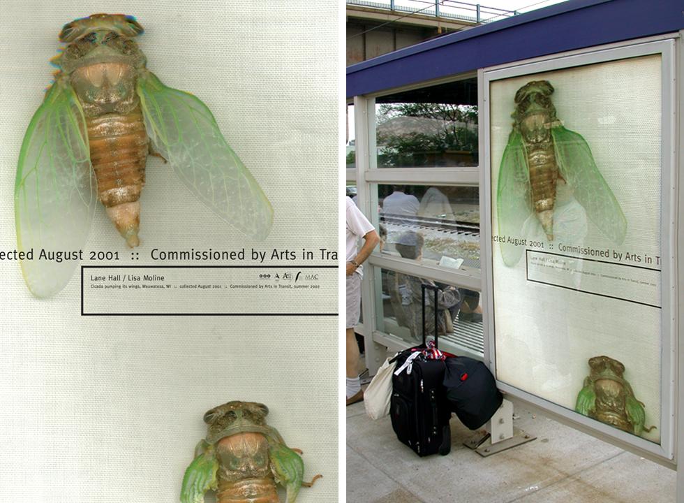 luminario-poster-cicada
